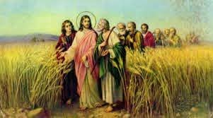 """LXXVIII 1022 """"Inną przypowieść im przedłożył: Królestwo niebieskie podobne jest do człowieka, który posiał dobre nasienie na swej roli"""" (Mt 13, 24). Jakże często niebieski Siewca rzucał dobre nasienie na rolę dusz ludzkich! Najpierw w raju, gdzie stworzył ludzi sprawiedliwych i świętych, aby przynosili owoc na żywot wieczny. Następnie przez patriarchów i proroków, których nauka i postępowanie były nasieniem dobrym. Potem przez Syna swego jednorodzonego, przez jego pełną mądrości naukę, jego święte, pełne prawdy i łaski życie i jego śmierć na odkupienie świata. A potem przez napełnionych duchem bożym apostołów, męczenników i misjonarzy. Wreszcie przez tylu założycieli zakonów i przez nich stworzone organizacje. Zastanów się nieco nad tym, a zawołasz i ty z głębi serca: """"Chwalcie Pana, bo dobry, bo na wieki Jego łaskawość"""" (Ps 106, 1). I jeszcze więcej. Ten sam niebieski Siewca rzuca ponadto dobre ziarno przez rodziców, nauczycieli i kapłanów. Oni pracują w zastępstwie Jezusa: """"Przeznaczyłem was na to, abyście szli i owoc przynosili"""" (J 15, 16). Oni pracują w zastępstwie Jezusa: """"Nie wy będziecie mówili, lecz Duch Ojca waszego będzie mówił przez was"""" (Mt 10, 20). Oni pracują w łączności z łaską Jezusa: """"Oto Ja jestem z wami przez wszystkie dni, aż do skończenia świata"""" (Mt 28, 20). Miałeś dobrych rodziców, nauczycieli, przewodników duchownych, to dziękuj Bogu za to i zachowaj dla nich wdzięczność, choćby już byli w grobie. Lecz pozwól dalej jeszcze działać niebieskiemu Siewcy w swej duszy, zwłaszcza przez kapłanów, za którymi powinieneś iść, gdyż ci Boga zastępują na ziemi. Słusznie bowiem mówią ci duszpasterze: """"My bowiem jesteśmy pomocnikami Boga, wy zaś jesteście uprawną rolą Bożą"""" (1 Kor 3, 9). A jeśli sam jesteś ojcem, matką, nauczycielem, nauczycielką lub jakimkolwiek innym wychowawcą, to pojmuj poważnie i wzniosie twoje powołanie i pamiętaj o odpowiedzialności, jaka spoczywa na tobie. Dbaj pilnie o to, byś siał w sercach ci powierzonych zdrowe ziarno dobrego pr"""